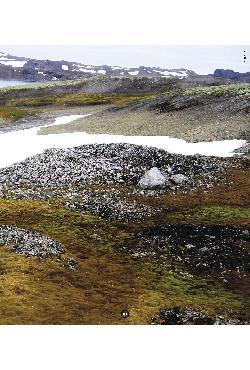 Antártica: ensino fundamental e ensino médio (Coleção expl ...